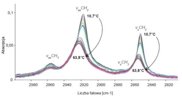 Widma absorpcyjne liposomów DPPC:AR(15:0) w zakresie średniej podczerwieni (3000 - 2800 cm-1) mierzone w funkcji wzrastającej temperatury.