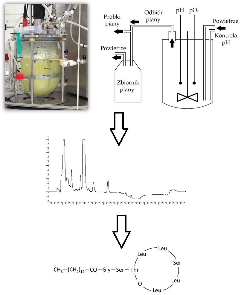 Proces produkcji lipopeptydu pseudofaktyny w bioreaktorze z jej oczyszczaniem metodami frakcjonowania piany i pół-preparatywnego HPLC