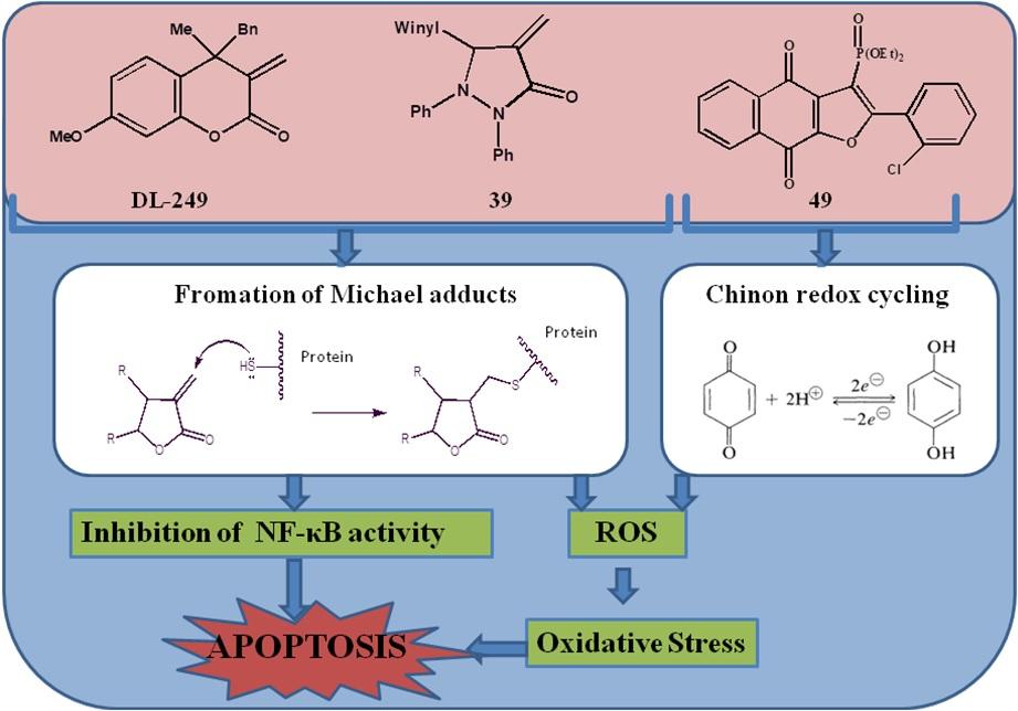 Przeciwnowotworowe właściwości nowych syntetycznych heterocykli: α-metyleno-δ-laktonu DL-249 , α-metyleno-γ-laktamu z dodatkowym atomem azotu w pierścieniu 39 oraz hybrydy naftalenodionu połączonej z pierścieniem furanu i grupą fosfonianową 49